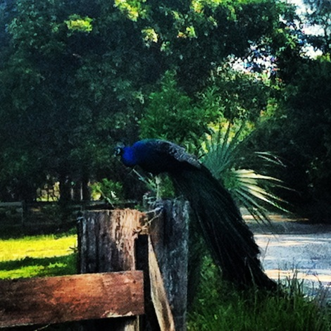 exercising with dog, dog running, running with dog, exercising with your pet